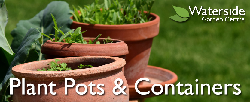 Plant Pots & Containers