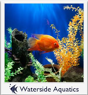 Waterside Aquatics
