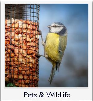 Pets & Wildlife