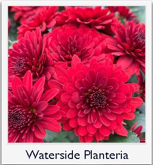Waterside Planteria
